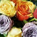 multiple roses