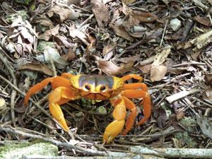 Sentier Enigma De Las Rocas Crabe De Terre 2 Valerie Collet